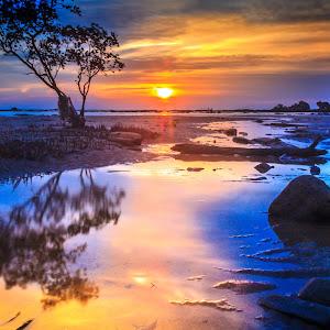 Bonzai Sunset 001.jpg
