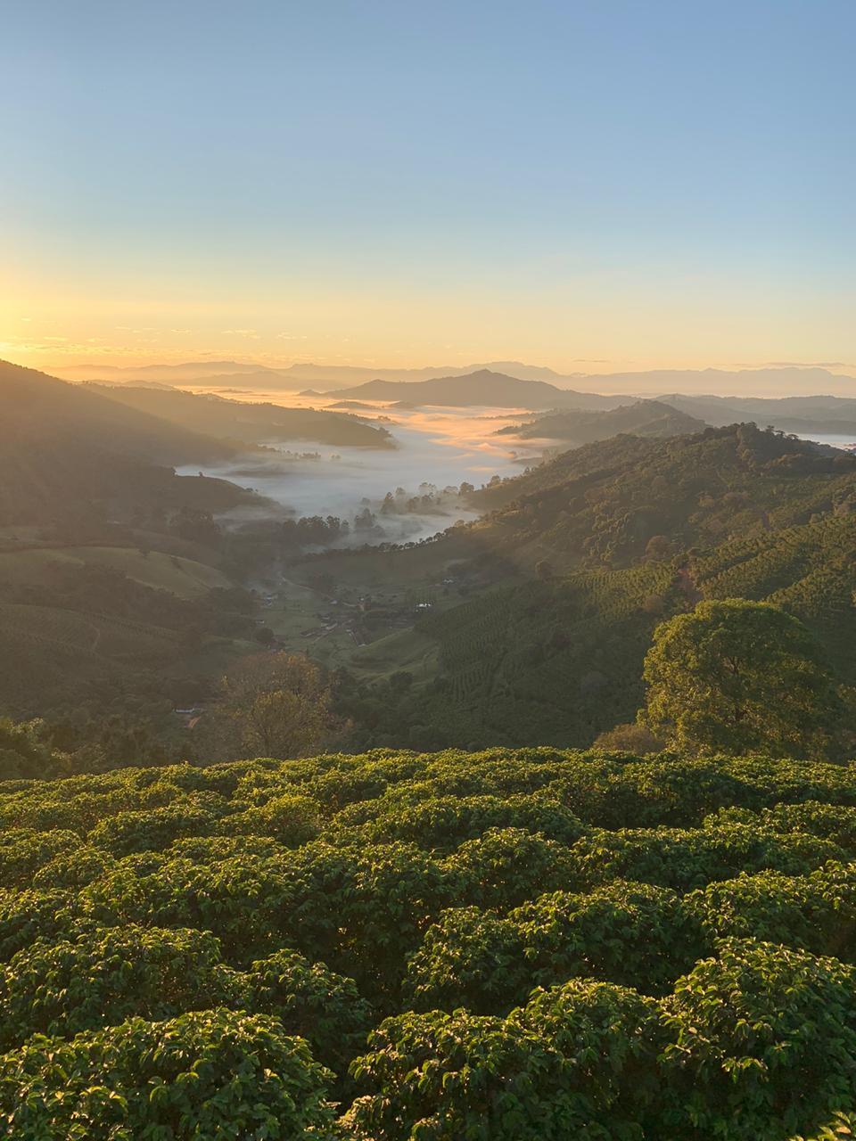 Coffee grown in the valleys between hills.