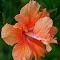 Orange h_Fotor.jpg