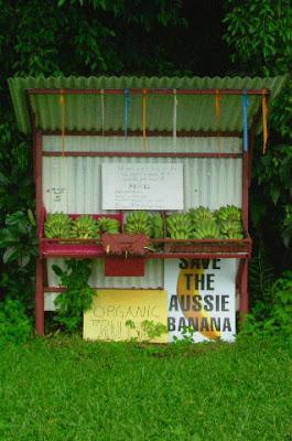 Banane australiane di fenix_vs