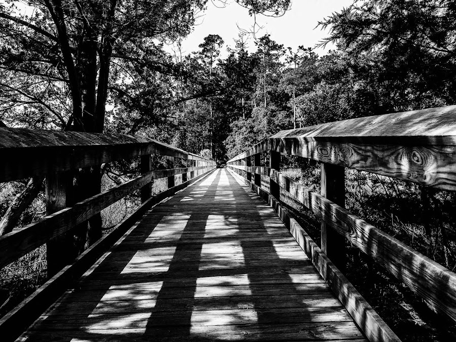 To Somewhere by Brennan Vining - Black & White Landscapes ( nature, black and white, forest )