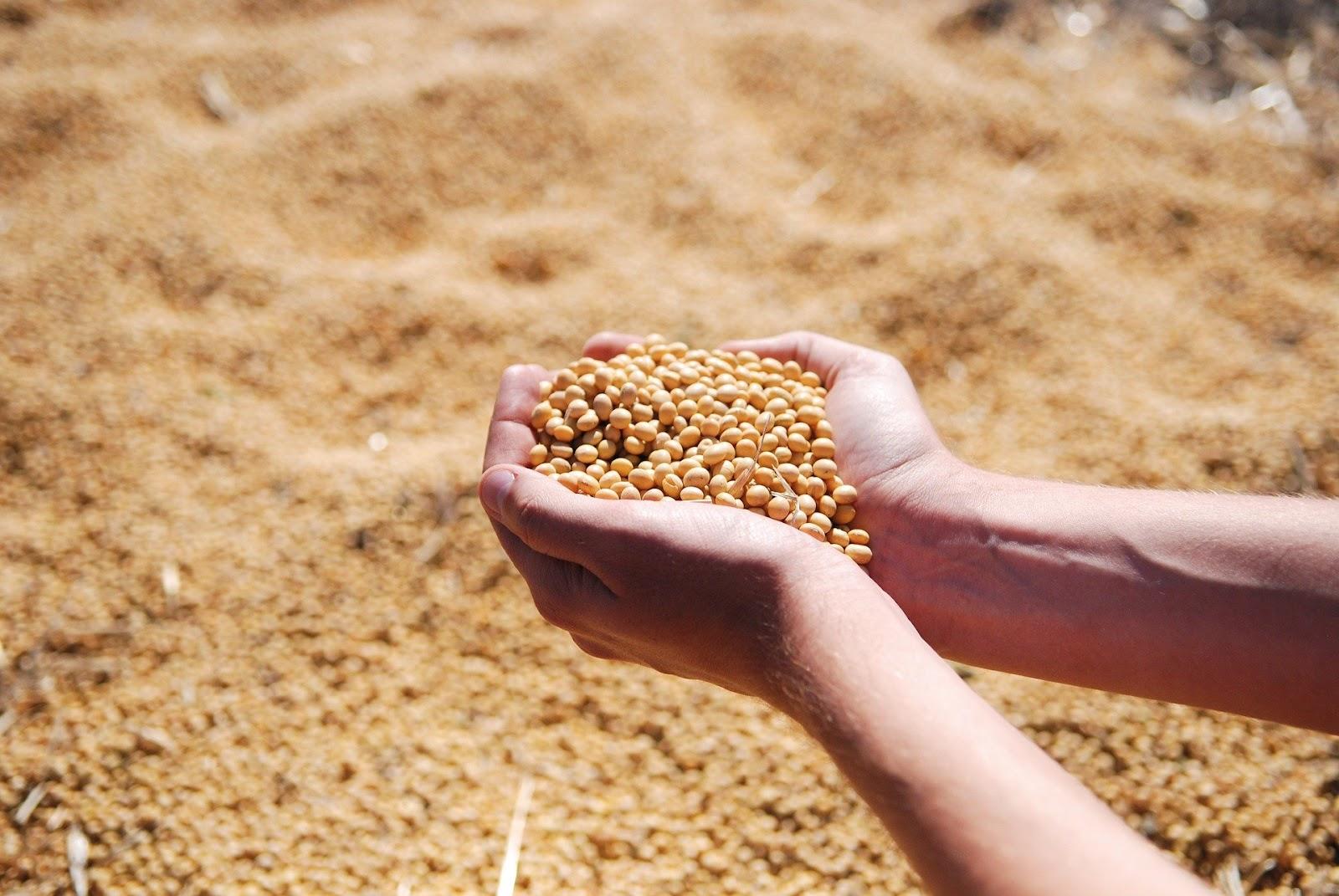 O cenário é mais promissor para o agronegócio apesar dos desafios para o futuro do setor (Fonte: Pixabay/1737576/Reprodução)