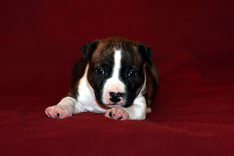 Photo: Mia Albachiara Apollo Alloro Ike (M) 