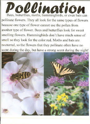 Pollination Notebook Page