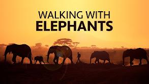 Walking with Elephants thumbnail