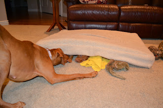 Photo: YES Akela gets herself under it each night and both her and Lila play like this!