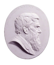 Photo: Alfred Russel Wallace by Albert Bruce-Joy plaster cast of medallion, 1906 11 in. x 9 1/8 in. (279 mm x 232 mm) oval Given by the sitter's children, W.G. and Violet Wallace, 1916 Primary Collection NPG 1764 © National Portrait Gallery, London Licensed under Creative Commons Attribution-NonCommercial-NoDerivs 3.0 Unported  (http://creativecommons.org/licenses/by-nc-nd/3.0/)