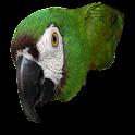 Scarletts Parrot Essentials