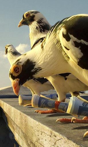 鸽子 Lwp
