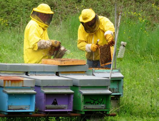 Le api, fonti di vita di Giorgio Lucca