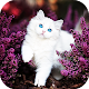 Cute Cat Live Wallpaper - backgrounds hd APK