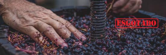Como fazer o meu Vinho Biológico – 31 Agosto 2019