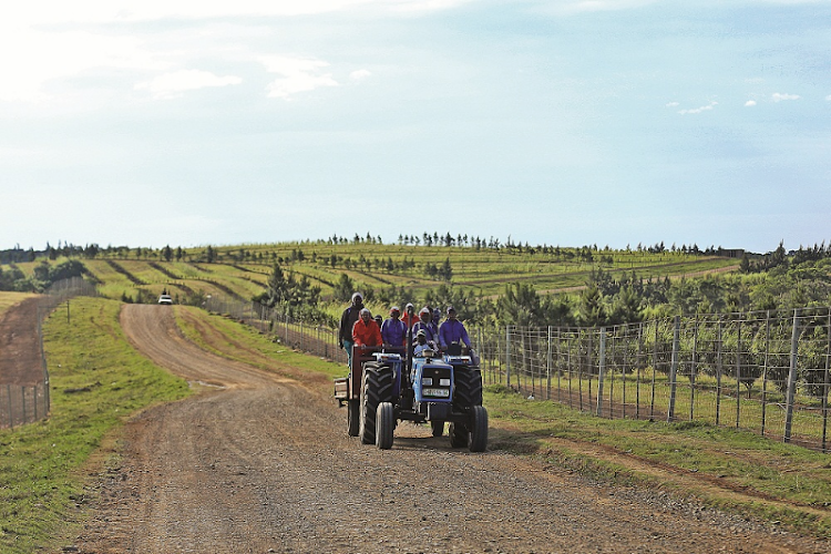 Farmworkers head home after a long day of planting and ploughing at a macadamia farm in Ncera Village in the Eastern Cape. Picture: DAILY DISPATCH