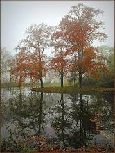 Photo: Nederland - Natuur in spiegelbeeld Foto: Marijke van den Eertwegh