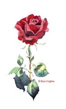 Photo: rose02
