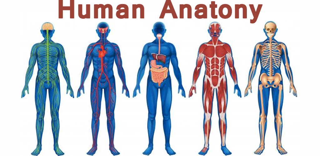 Download Menschliche Anatomie Apk Neueste Version App Für Android-Geräte