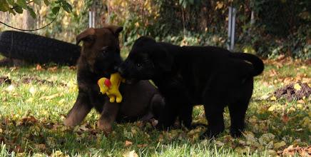 Photo: Drago und Dahlia