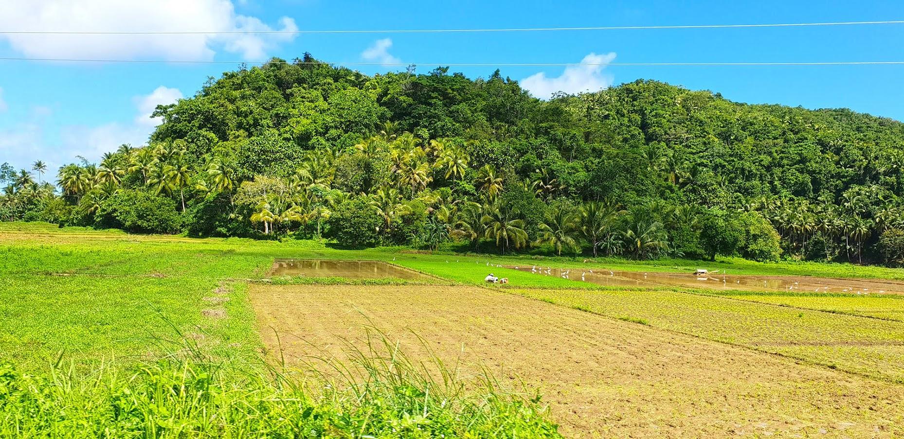 VISITAR SIARGAO - O que ver e fazer em Siargao, a ilha verde | Filipinas