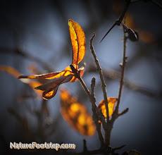 Photo: NF Photo 110223  http://nfbild2.blogspot.com/2011/02/nf-macro-24-lov-leaf.html