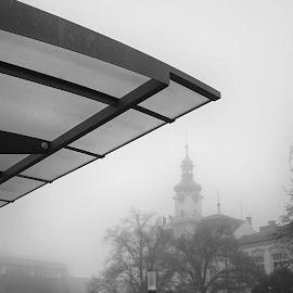 Misty morning by Michal Fokt - Instagram & Mobile Android ( android, black and white )