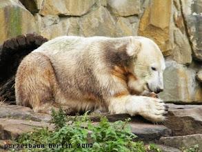 Photo: Knut hat ein Moehrchen entdeckt :-)