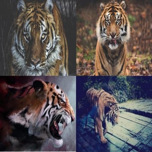 Tiger Parallax
