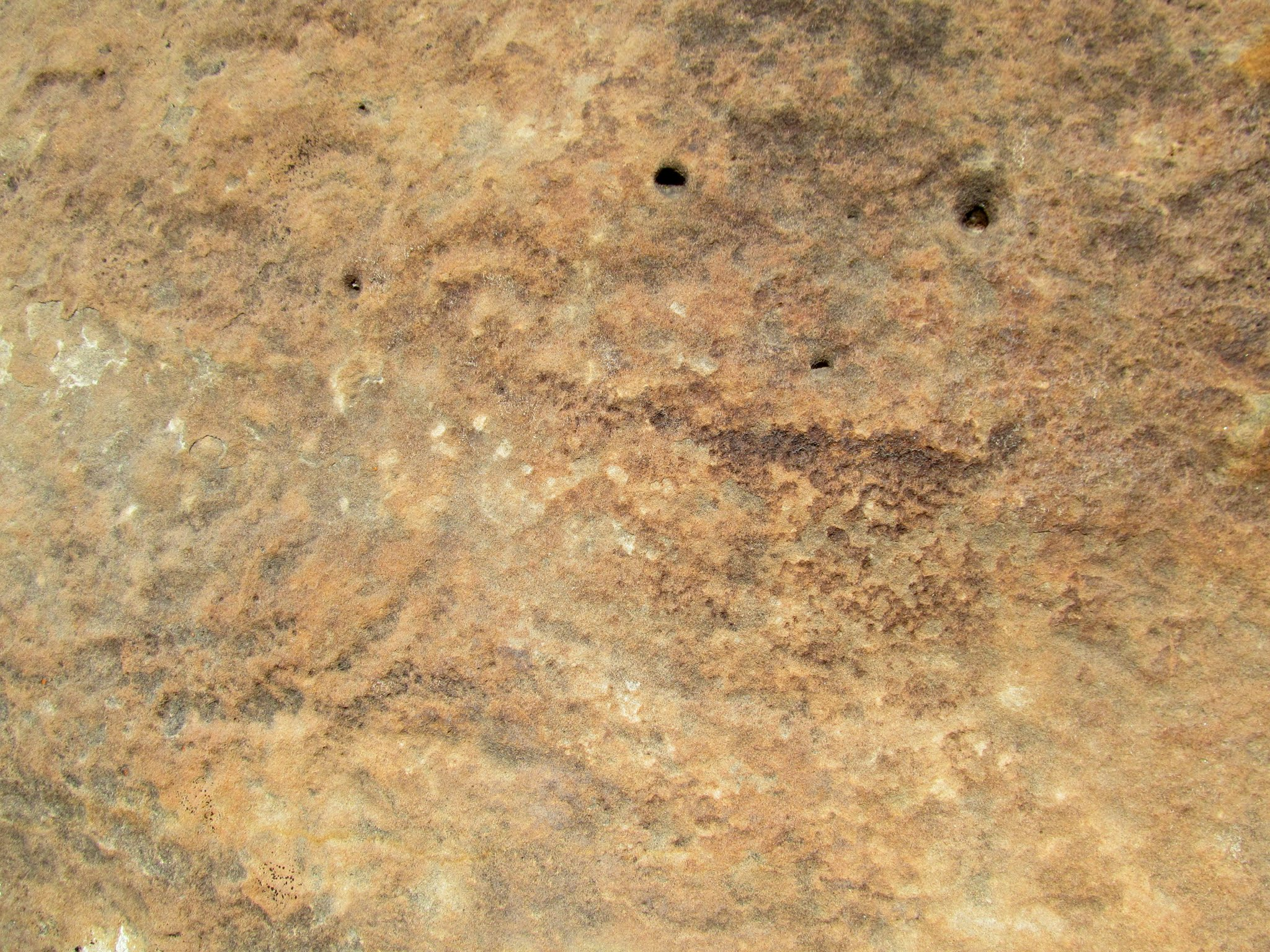 Photo: One of the better bighorn petroglyphs