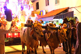 Photo: Year 2 Day 109 - Float Pulled By Oxen