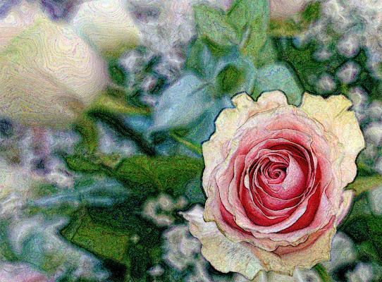 Si destano le rose di lugiube