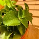 Ayurvedic Home Remedies - English Offline Download for PC Windows 10/8/7
