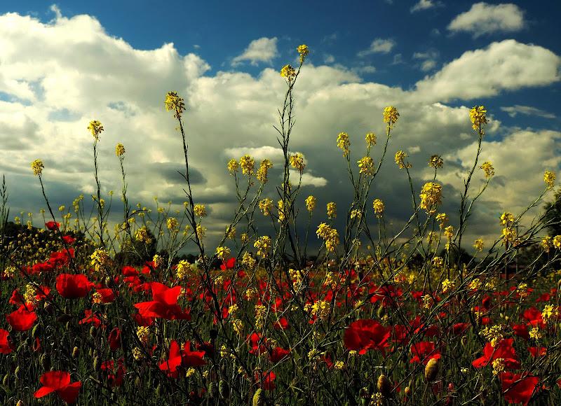 In aprile con lo sbocciare dei fiori la vita risplende di nuovi colori  di renzo brazzolotto