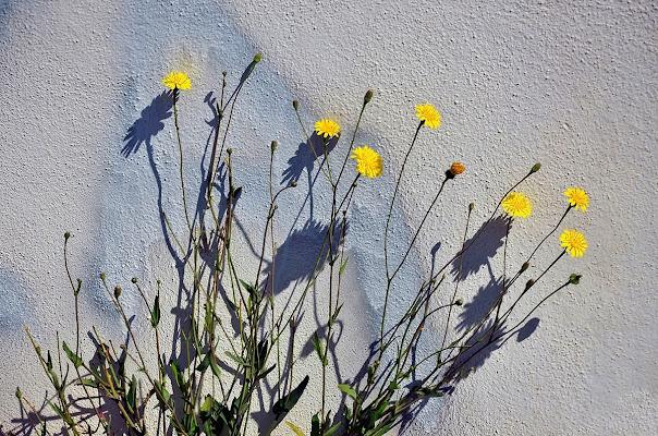Grandi ombre per piccoli fiori di ely50