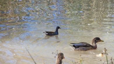 Photo: Pollas de agua