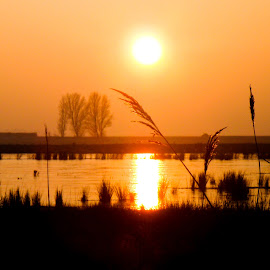 Golden hour by Anya L - Landscapes Sunsets & Sunrises ( golden hour, sunset, silhouette, quiet, lake )