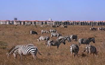 Photo: Zebras outside Nairobi