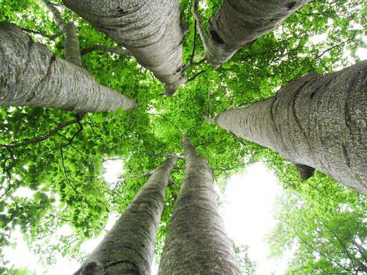 woods di ytse_jam