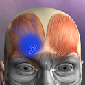Muscle Trigger Point Anatomy icon