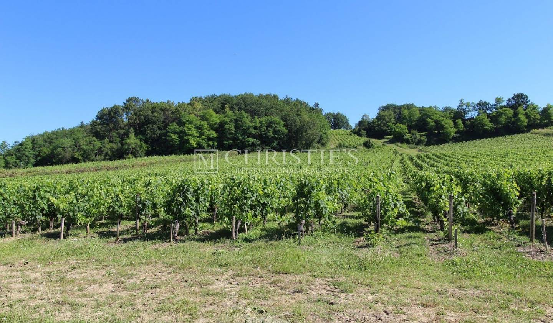 Vineyard Castillon-la-Bataille
