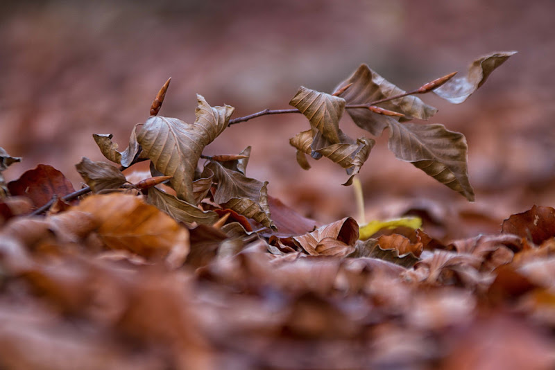 dettagli d'autunno di antonioromei