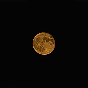 Blood Moon by Amber Reeder Crowl - Landscapes Sunsets & Sunrises ( orange, blood moon, moon, red, sky, dark, night )