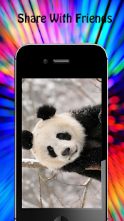 Panda Wallpapers - náhled