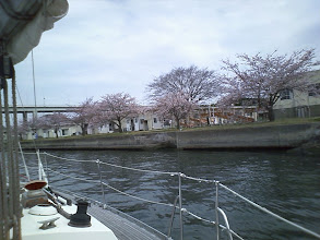 Photo: 堀割川をちょっと上って花見