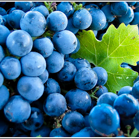 Wine Before Its Time by Jebark Fineartphotography - Food & Drink Fruits & Vegetables ( wine, grapes, california, harvest, usa )