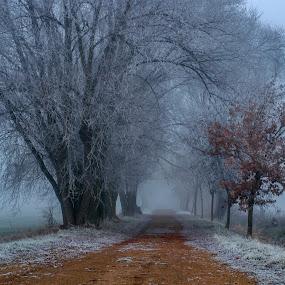 In the morning mist 3 by Jiří Valíček - Landscapes Weather ( fog, creek, frost, morning, landscape,  )