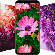\ud83c\udf3a Flower Wallpapers - Colorful Flowers in HD & 4K