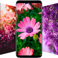 🌺 Flower Wallpapers - Colorful Flowers in HD & 4K APK