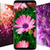 Flower Wallpapers - Colorful Flowers In HD & 4K Android APK Download Free By SiriApps