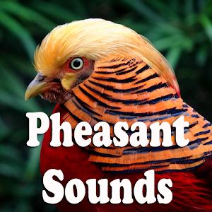 download Pheasant Sounds apk