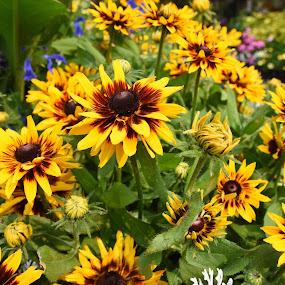 Yellow by Gabriela Zandomeni - Flowers Flower Gardens