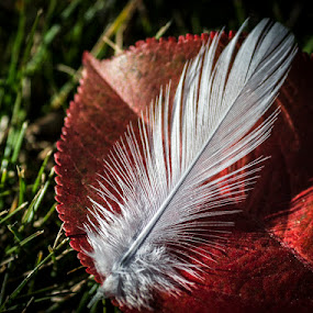 by Melissa S. Hunt - Artistic Objects Still Life ( macro, autumn, still life, leaf, feather, objects )